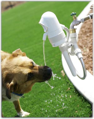 WaterDog automatic outdoor pet drinking fountain