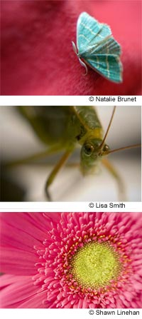 Images taken with the Lensbaby Macro lenses