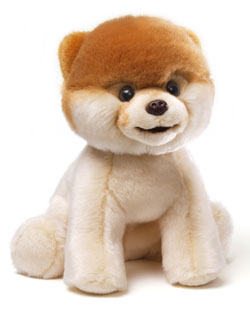 GUND BOO, The World's Cutest Dog
