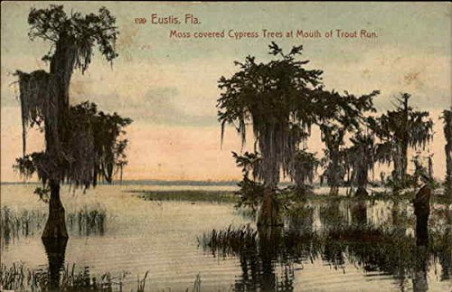 Moss Covered Trees at Mouth of Trout Run in Eustis, Florida