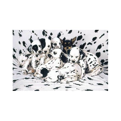Image 0 of Sunsout Wheres Ricardo 1000 Piece Jigsaw Puzzle Toy Multi-Color