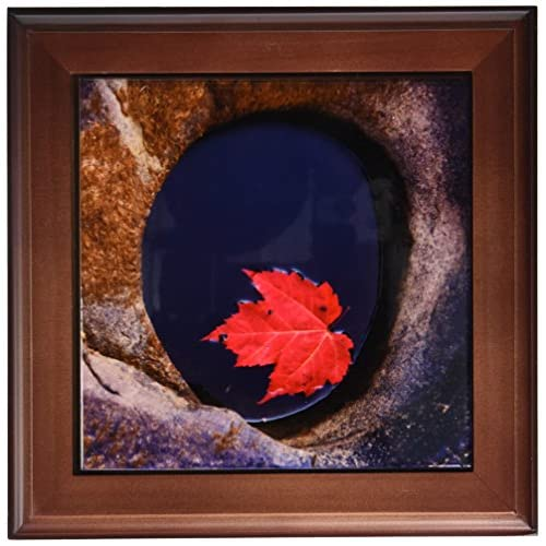 3DROSE Ft 209965 1 Michigan Black River Red Maple Leaf In A Small Lava
