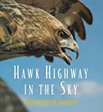 Hawk Highway in the Sky: Watching Raptor Migration by Caroline Arnold, Robert Kruidenier (Hardcover)