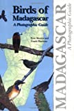 Birds of Madagascar: A Photographic Guide