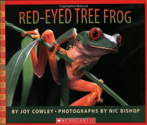 [Red-Eyed Tree Frog]