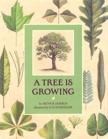 [A Tree is Growing]