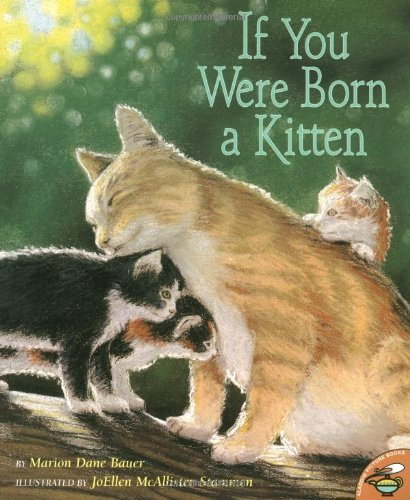 [If You Were Born a Kitten]