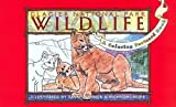 Glacier National Park Wildlife: A Coloring Postcard Book