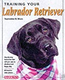 Training Your Labrador Retriever