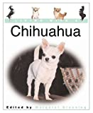 Living with a Chihuahua