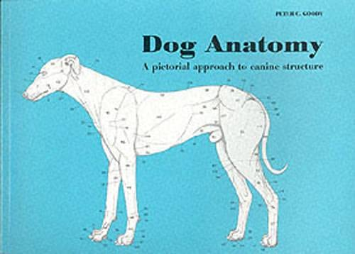 ANATOMY ATLAS COLORING DOG « ONLINE COLORING