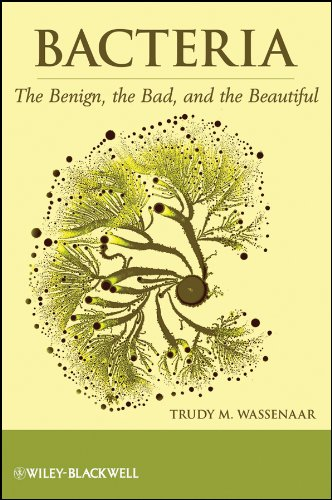PDF Bacteria The Benign the Bad and the Beautiful