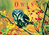 Owls: A Book of Postcards