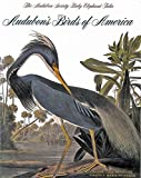 Audubon's Birds of America: The Audubon Society Baby Elephant Folio