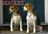 Beagles: A Book of 21 Postcards
