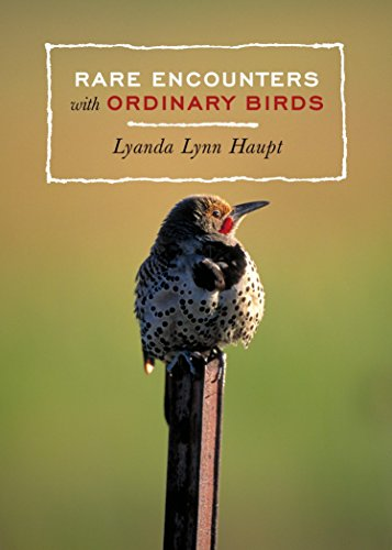 Rare Encounters With Ordinary Birds by Lyanda Lynn Haupt (Paperback)