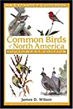 Common Birds Of North America: Southwest Edition: A Guidebook
