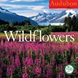 Buy Audubon Wildflowers 2011 Wall Calendar