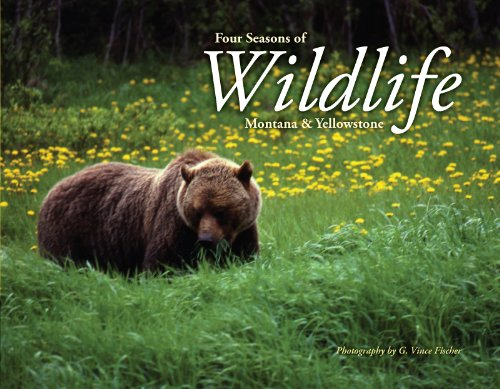 Four Seasons of Wildlife: Montana & Yellowstone [Paperback]