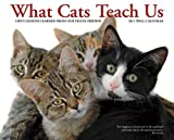 Buy What Cats Teach Us 2011 Wall Calendar