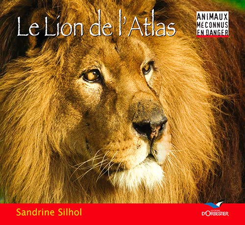 Le lion de l'Atlas