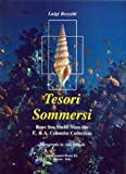 Tesori Sommersi: Rare Sea Shells from the E. & A. Colombo Collection