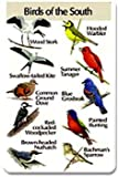 Identiflyer Additional SongCard-Birds of the South