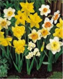 Mixed Narcissus