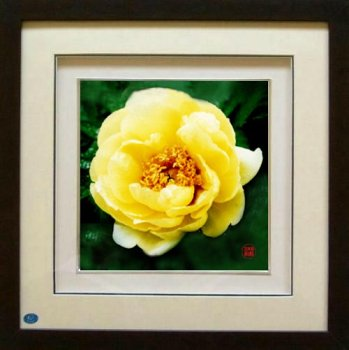 Home Decoration Framed Chinese Silk Embroidered Picture: Yellow Peony