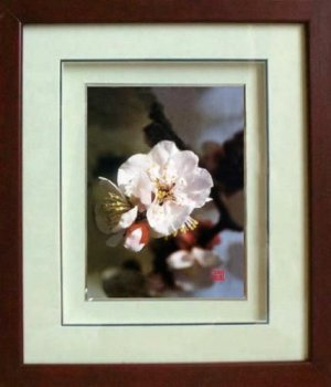Framed Handmade Silk Embroidered Picture: Plum Blossom Flower 5