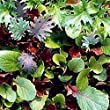 Tangy Mesclun Mix Greens