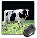 Farm Animals - Holstein Cow - Mouse Pads
