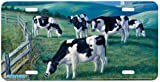 Amazing Grazing - Cow Art Print - License Plate by Randy McGovern from Airstrike, Inc.