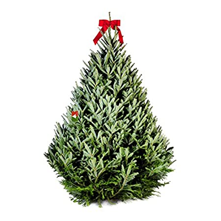 Fresh-cut Top Quality Fraser Fir Christmas Tree – 7.5-8 Ft.