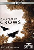 A murder of crows : birds with an attitude