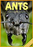 Free Kindle Book : Ants: Fun Facts and Cool Pictures. Insect Photos & Insect Facts for Kids. (Animal Photo Books for Kids.)